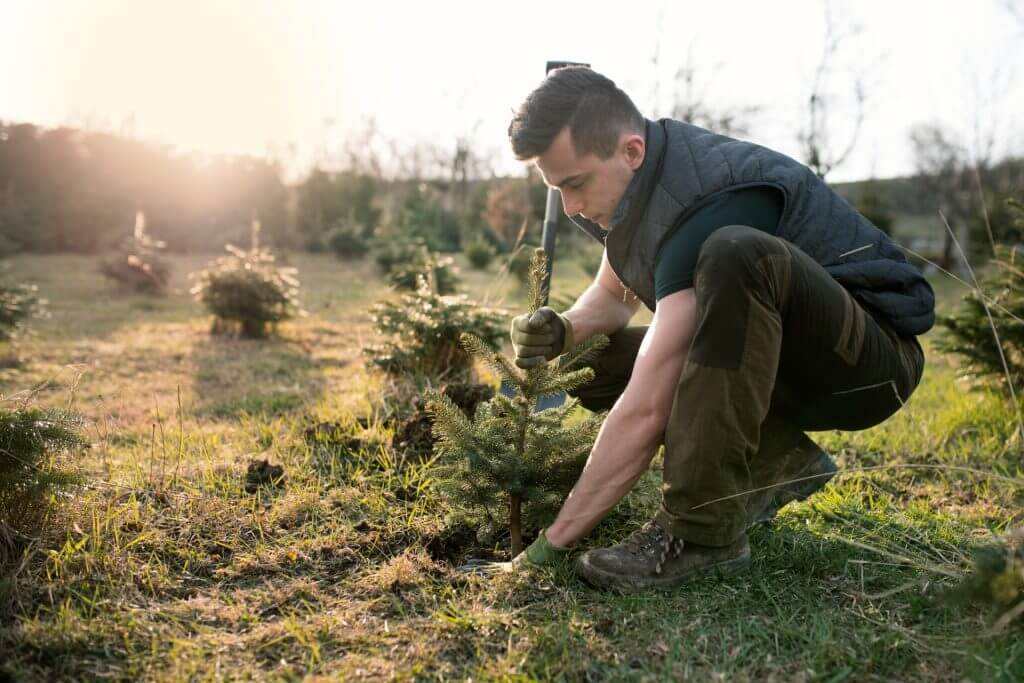 Evergreen Lawn & Tree Care | Cheyenne, WY | Landscaping & Tree Services